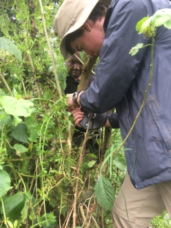 Maurice conducting Swamp survey with member of BCS team
