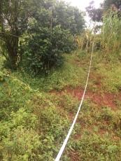 Swamp surveying