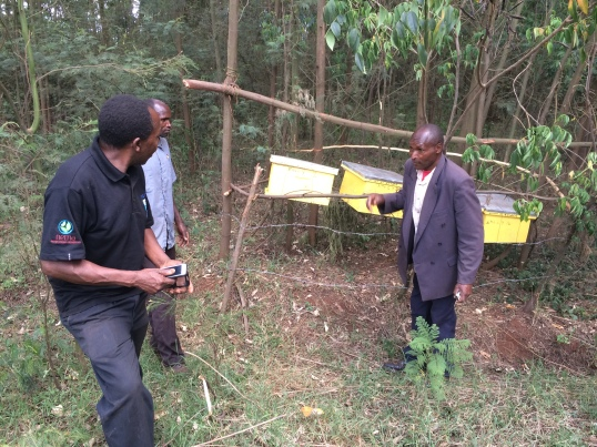 KCWCG Beehives in location Nandi County