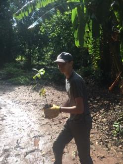 BCS Tree planter